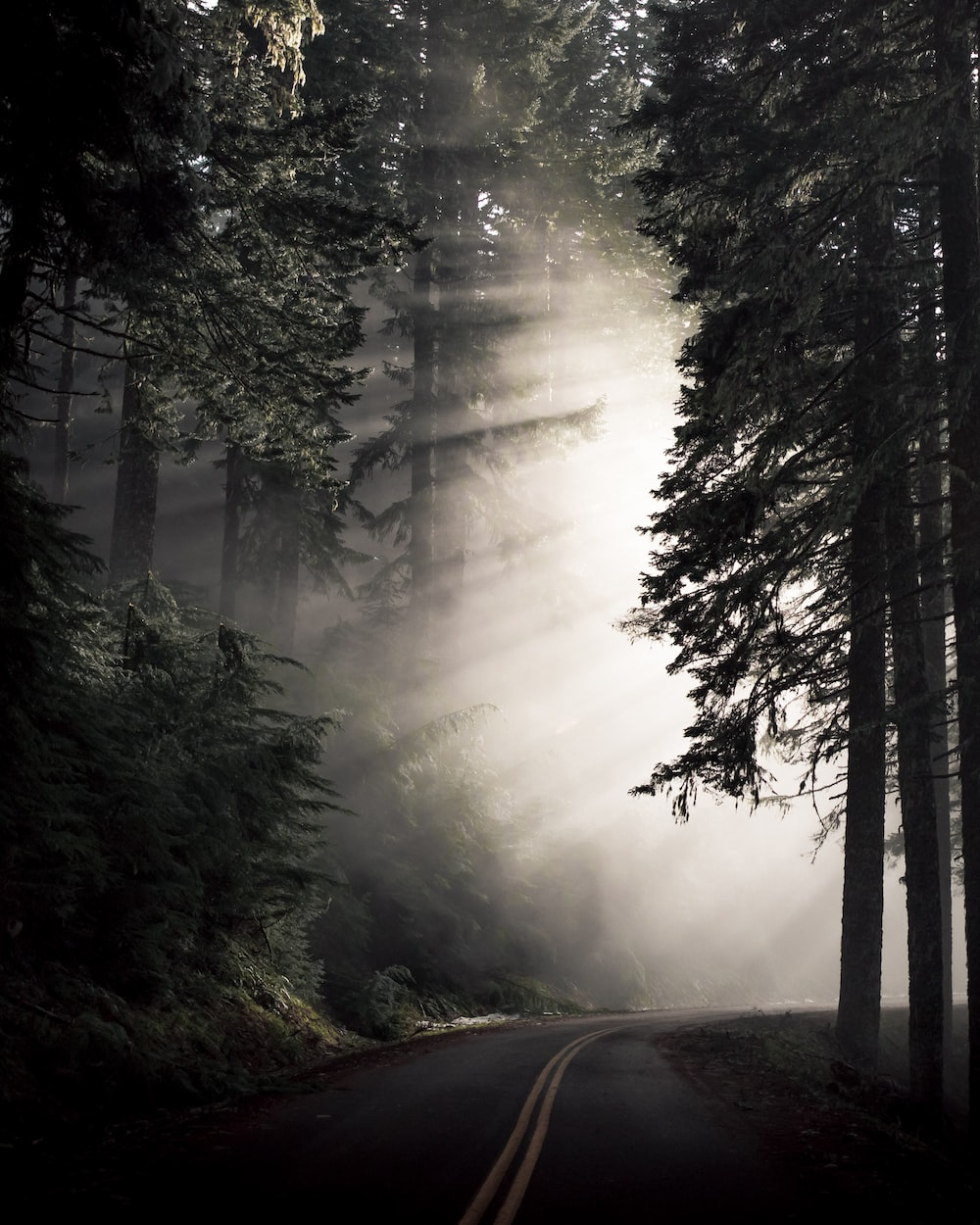 sunlight passing through thick woods along the winding road