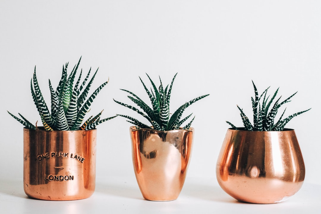 Rose Gold Wallpapers Free Hd Download 500 Hq Unsplash
