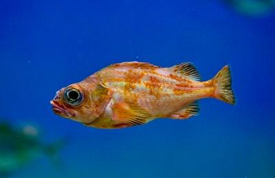 It's Fish That Looks Like Fish...