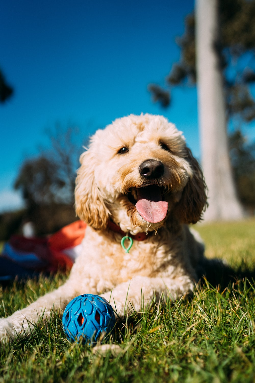 long fur white dog on grass