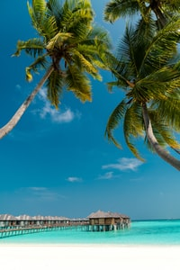 low angle photography of coconut trees on shore