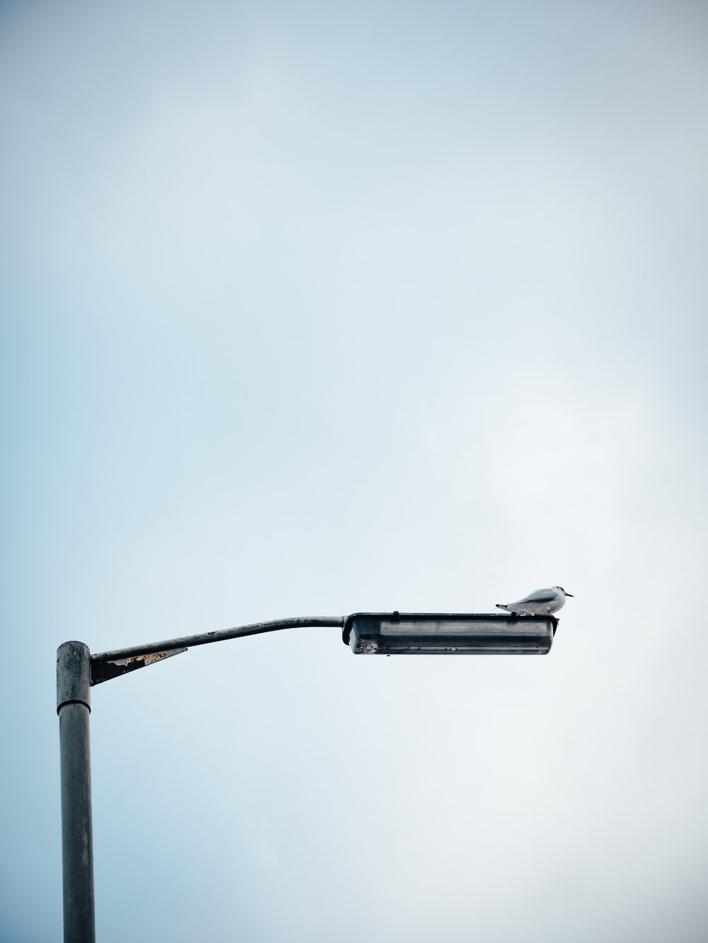 bird perched on streetlight during daytime