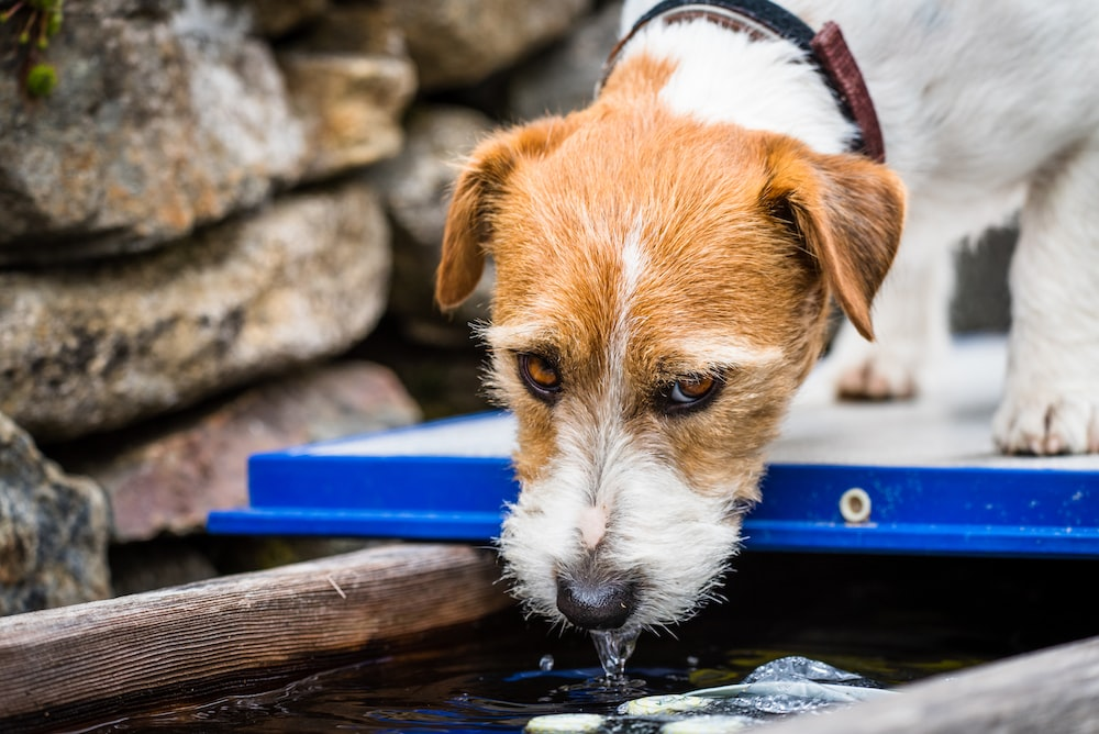 selective focus photography of dog drinking water