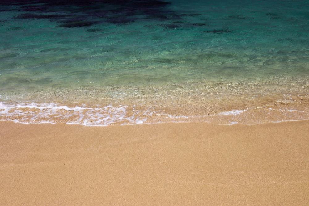 green seashore during daytime