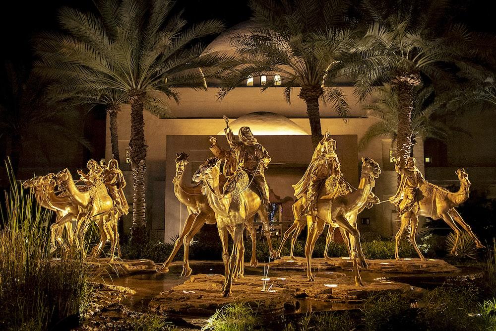 women riding on camel during nighttime