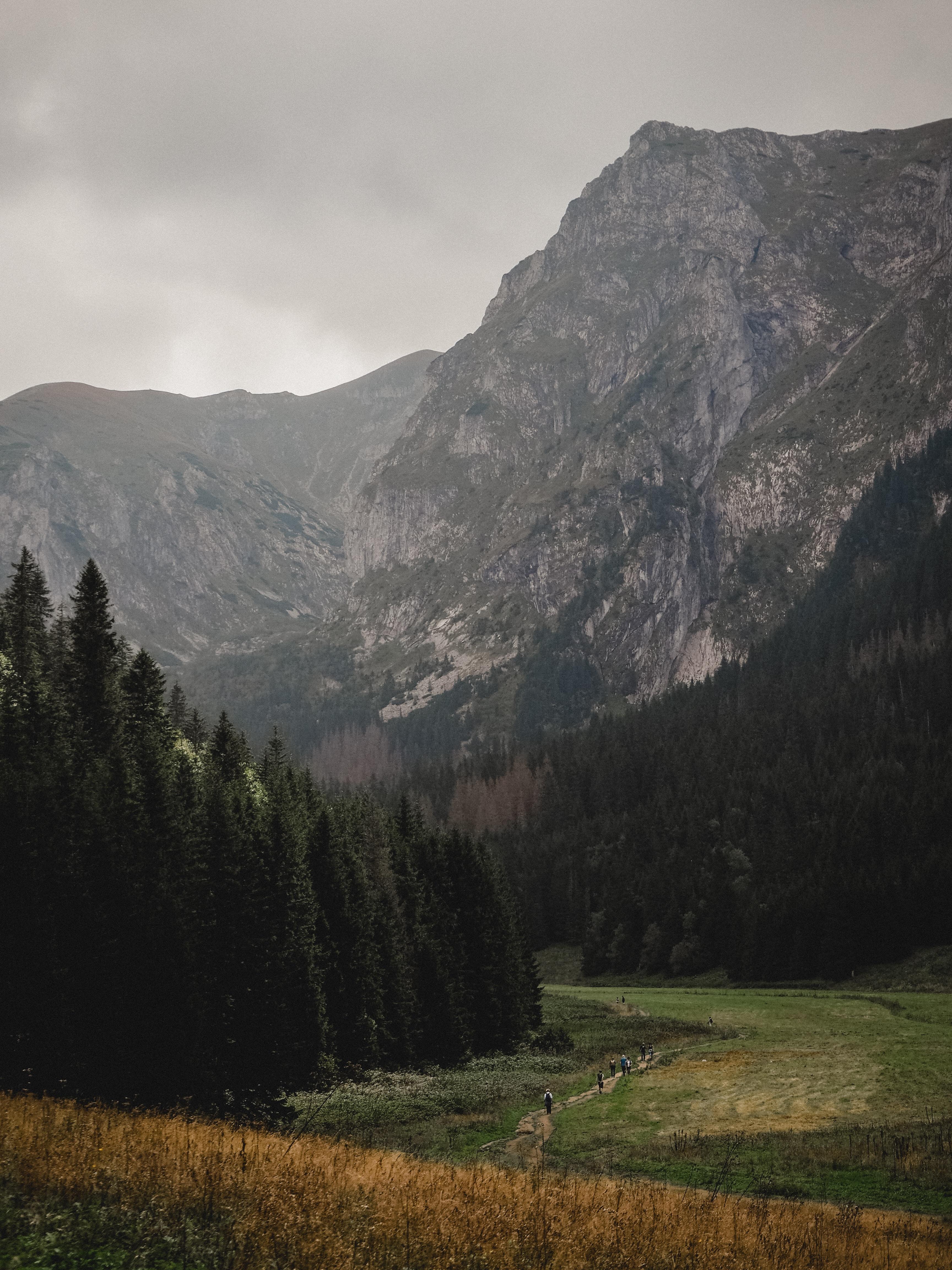 grass field near mountain