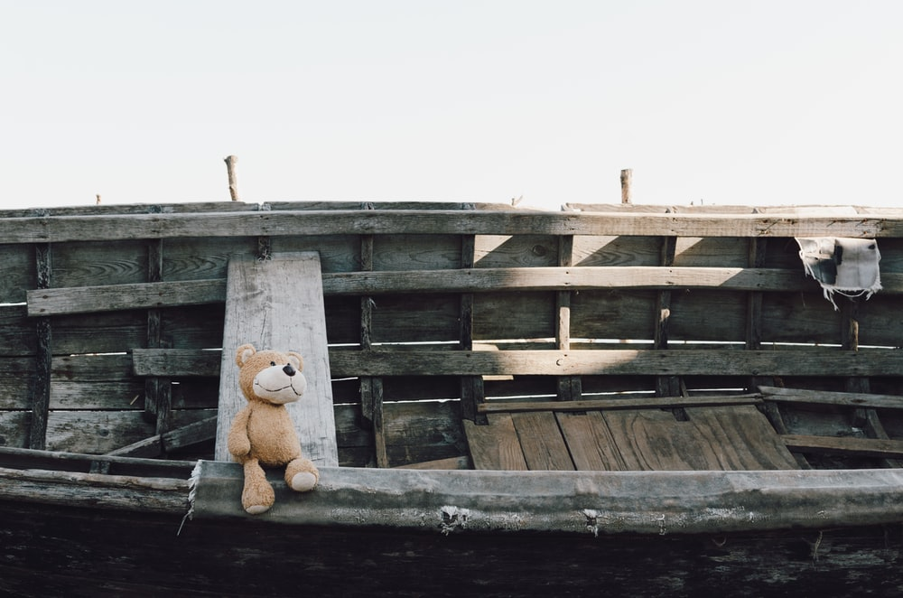 brown bear on boat
