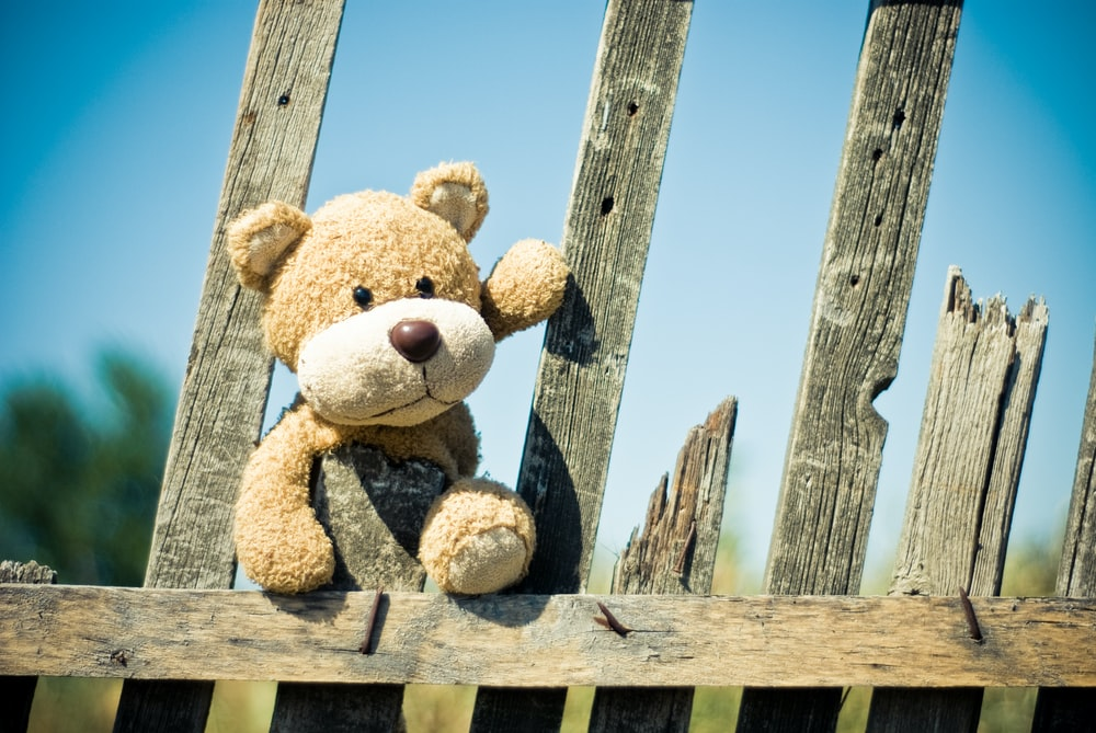 brown bear on fence