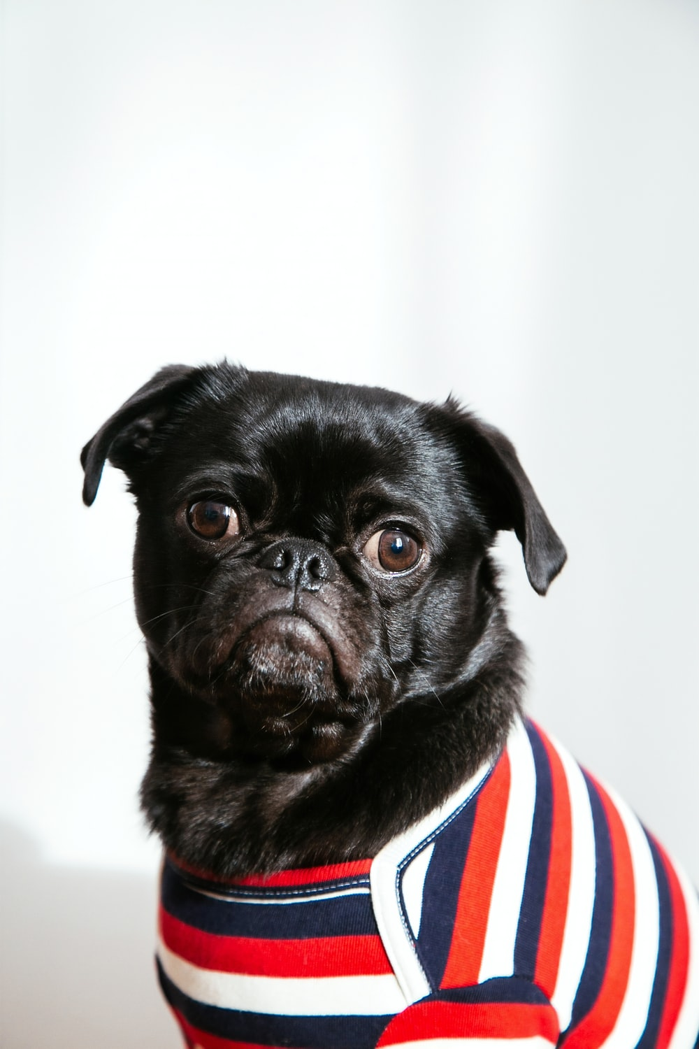 black dog wearing blue, red, and white shirt
