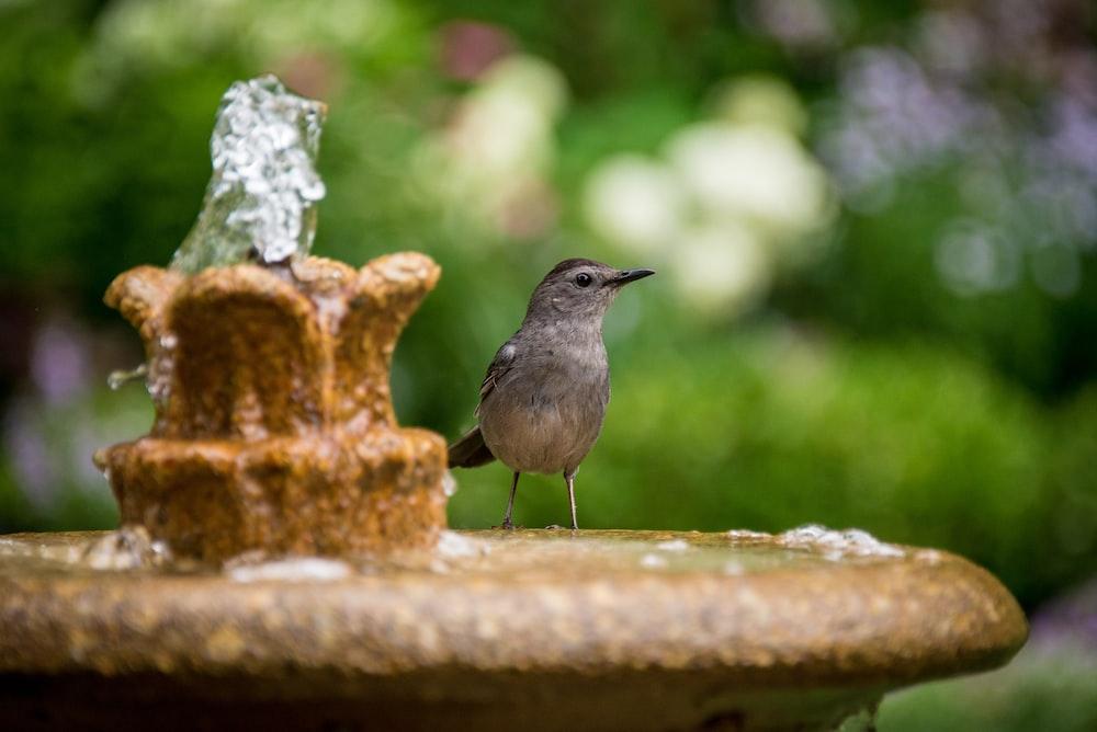 brown bird on brown fountain