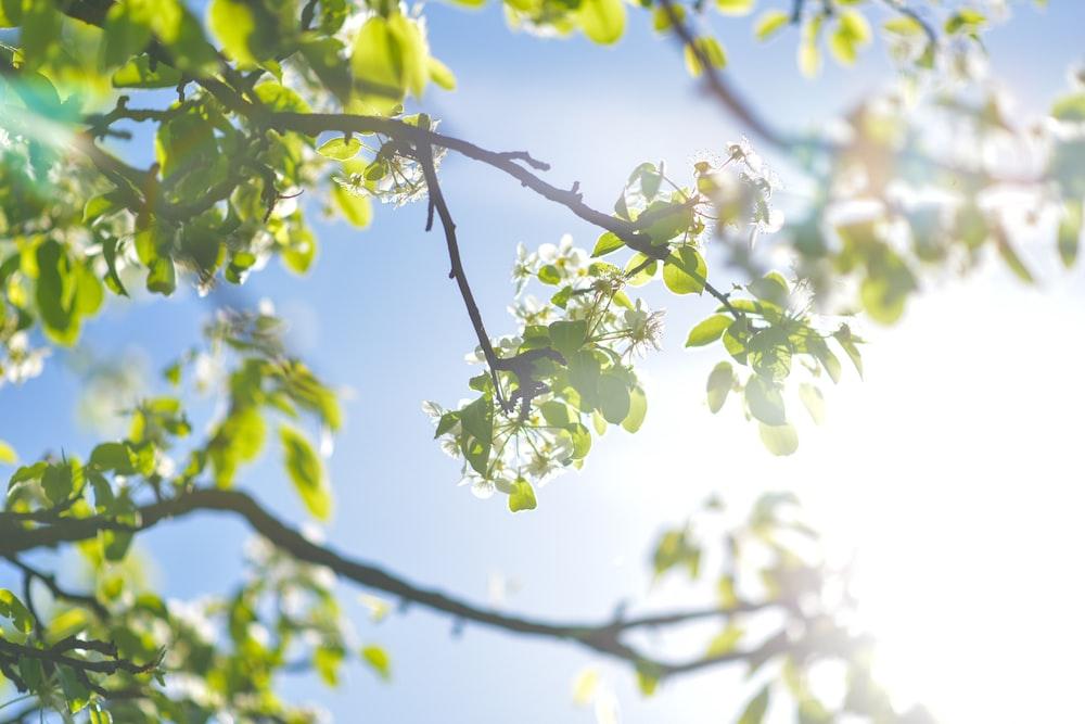 green leaf trees under blue sky