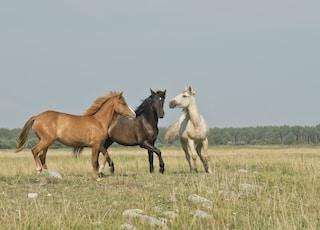 three horses on green ground
