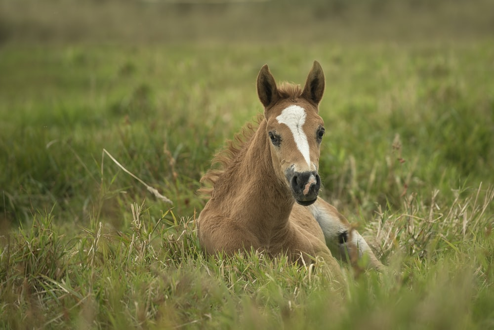 brown and white horse on grass during daytime