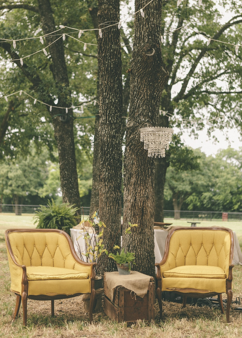 two beige fabric padded chairs under green tree