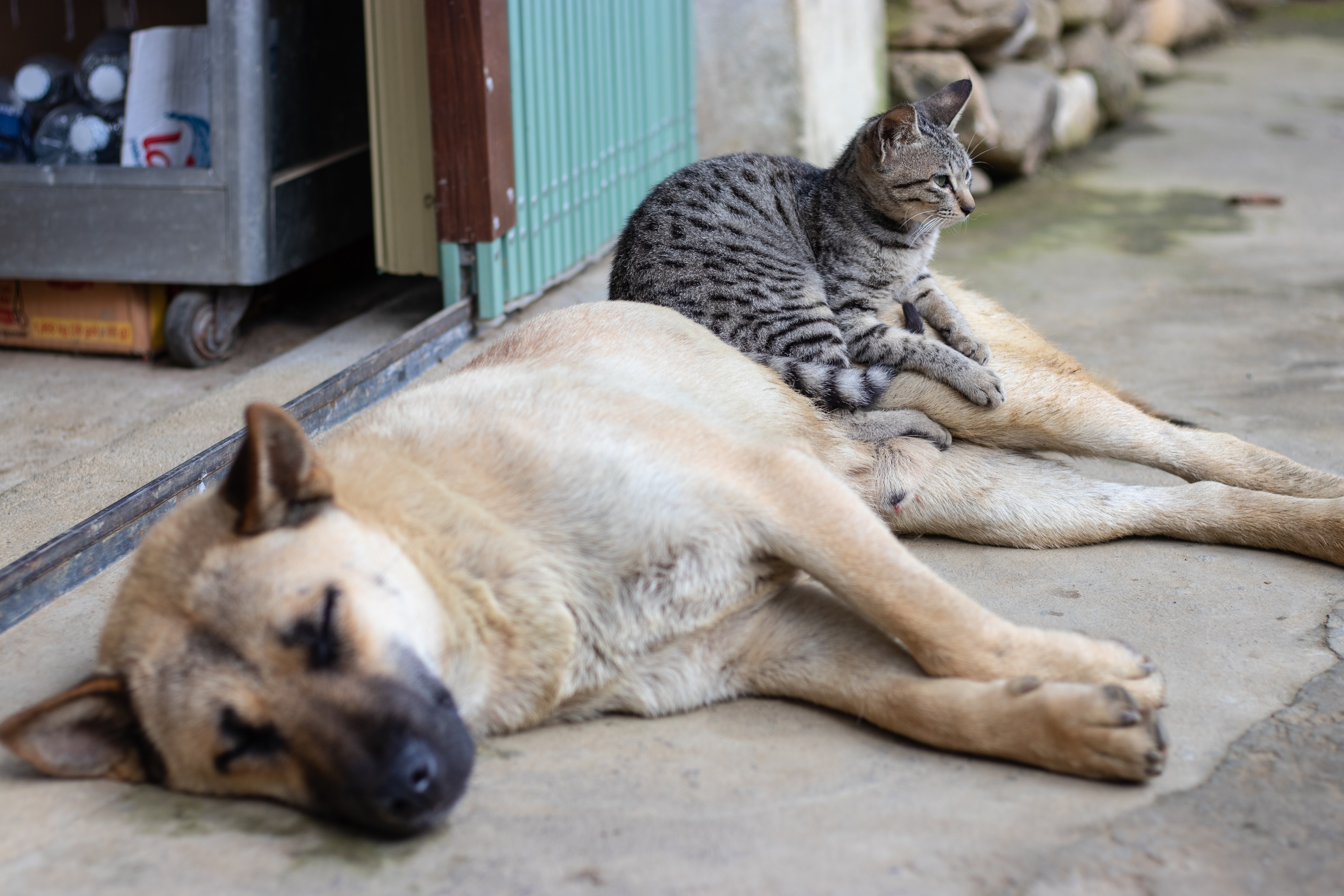 Dogs vs. Cats stories
