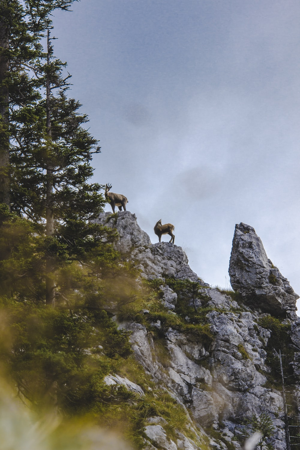 brown mountain goats on top of rocky mountain under gray sky