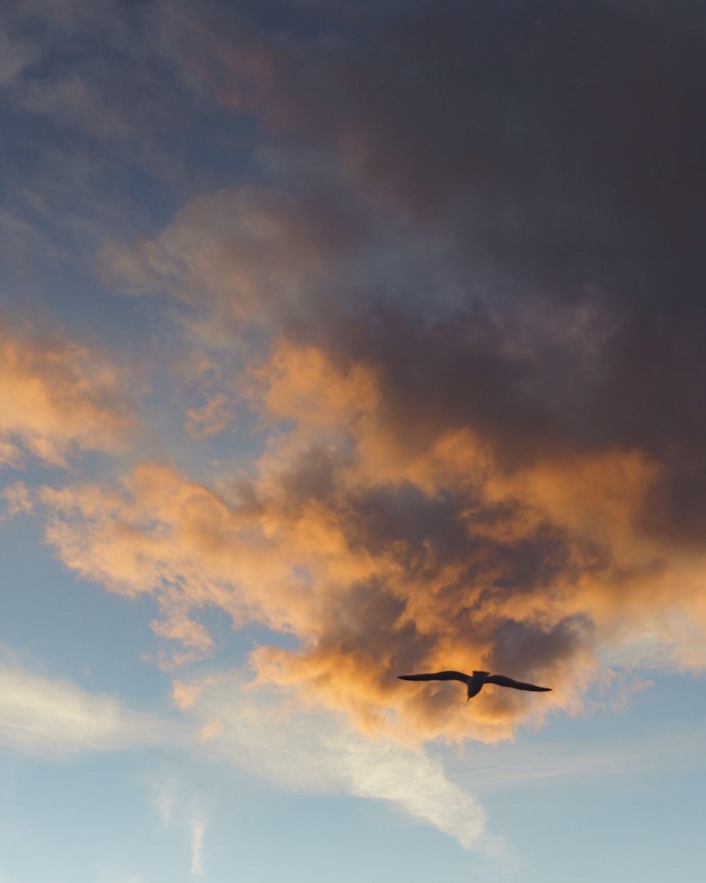 black bird flying at sky