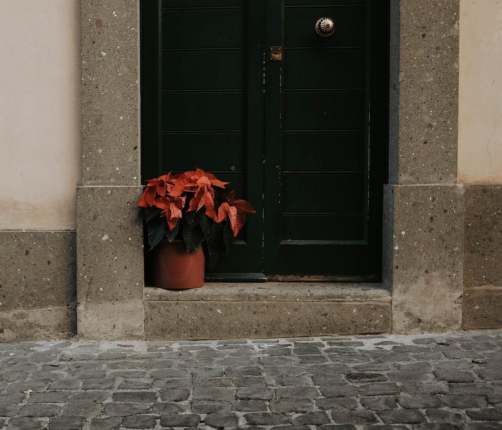 red plants in front of black wooden door