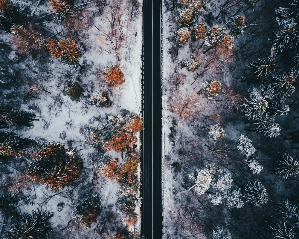 aerial view photography of roadway between trees