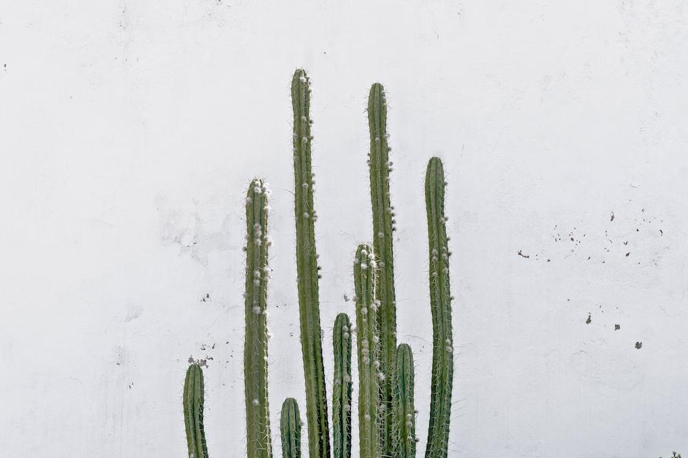 columnar cactus during daytime