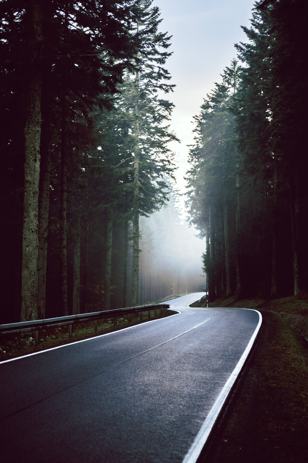 grey concrete road surrounded with tall trees
