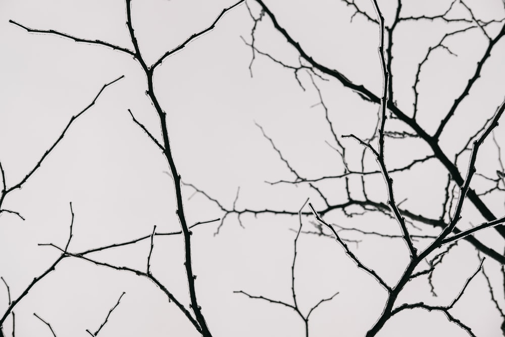 silhouette photography of tree branches
