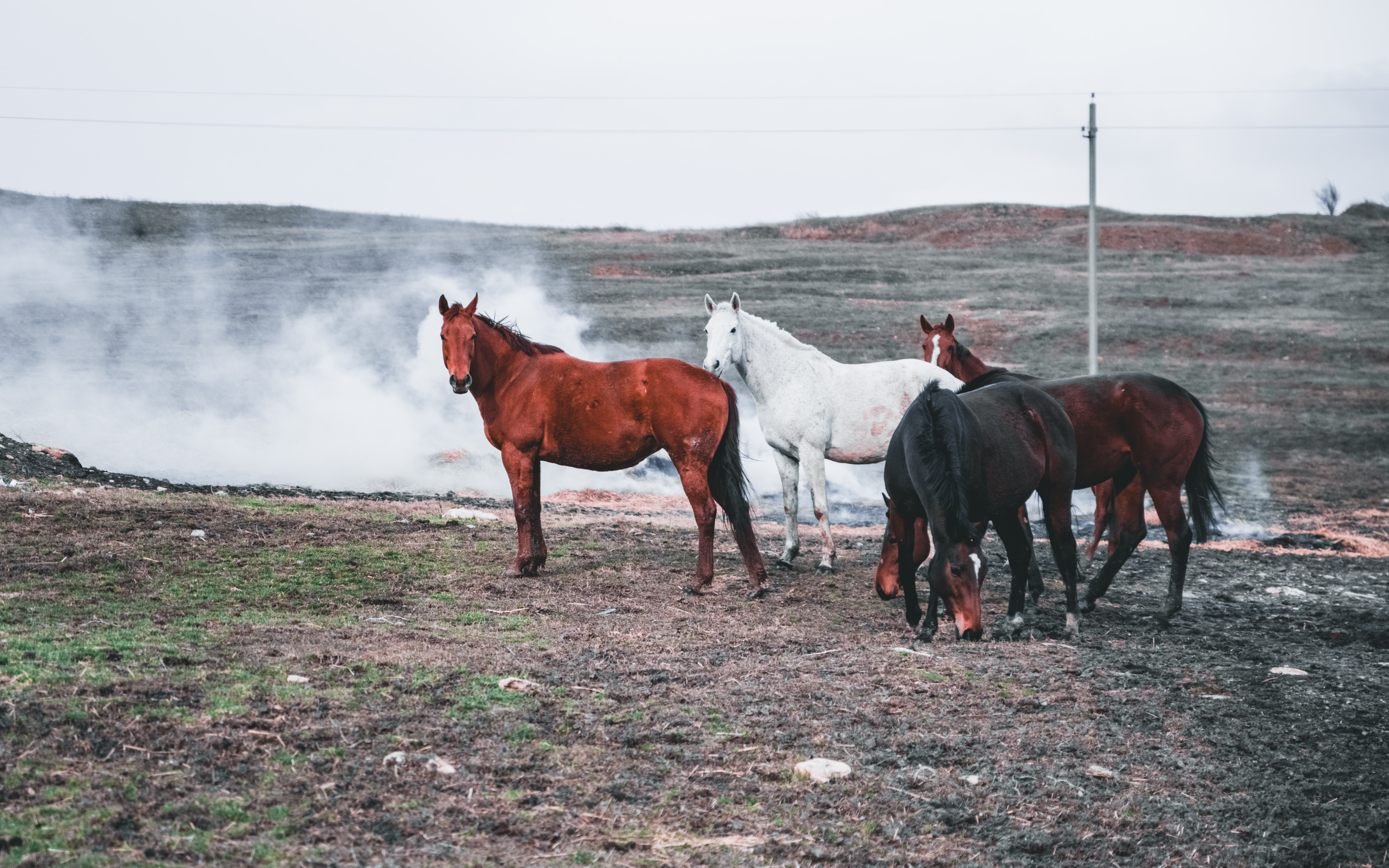 four black, red, and white horse standing on brown field