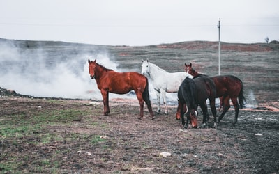 four black, red, and white horse standing on brown field plain zoom background