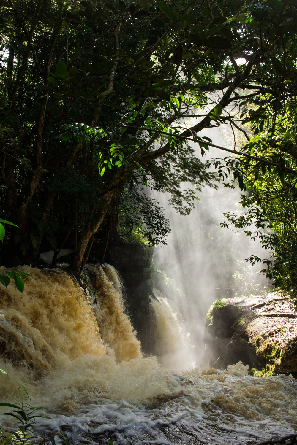 water falls with trees