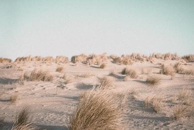 brown grass field during daytime sand zoom background