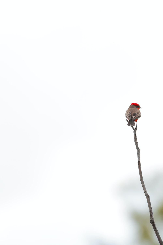 red bird perching on branch