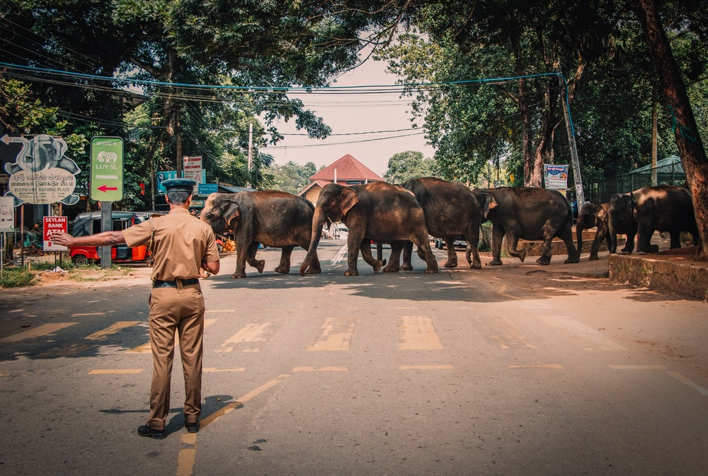 group of Elephants crossing across the street during daytime