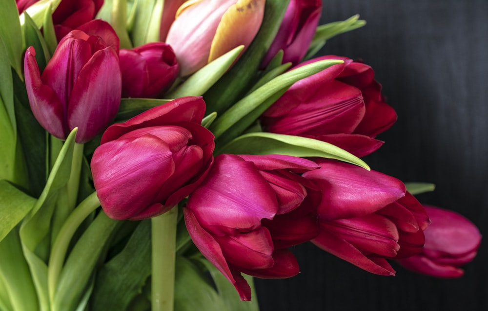 bouquet of tulips flower