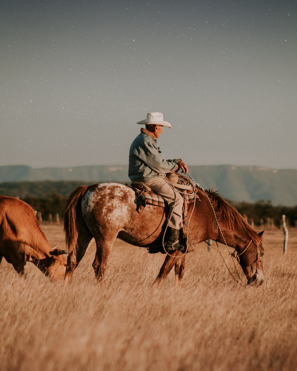 man riding horse on brown grass field during daytime