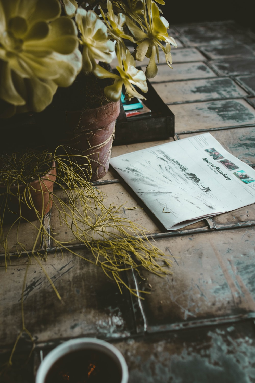 newspaper beside plant