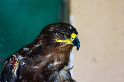 selective focus photography of eagle