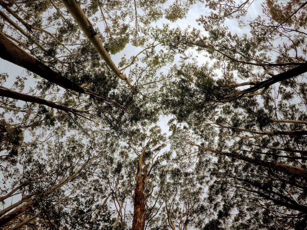 low angle photo of tree foliage