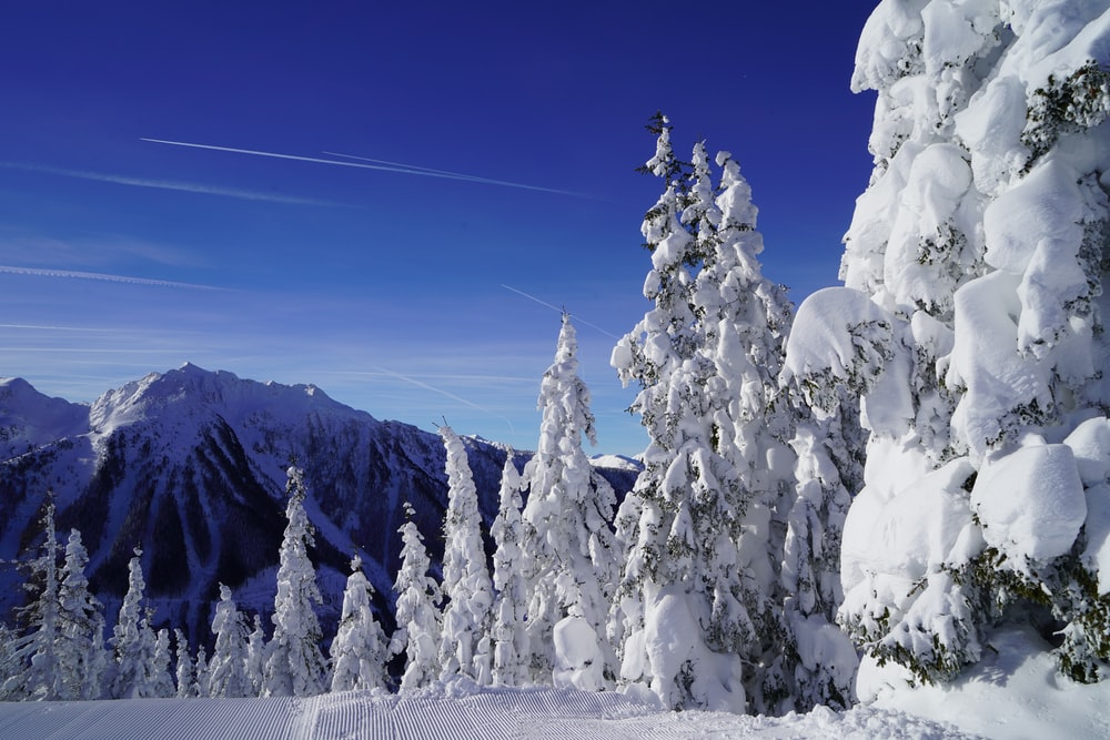 snow covered trees during winter