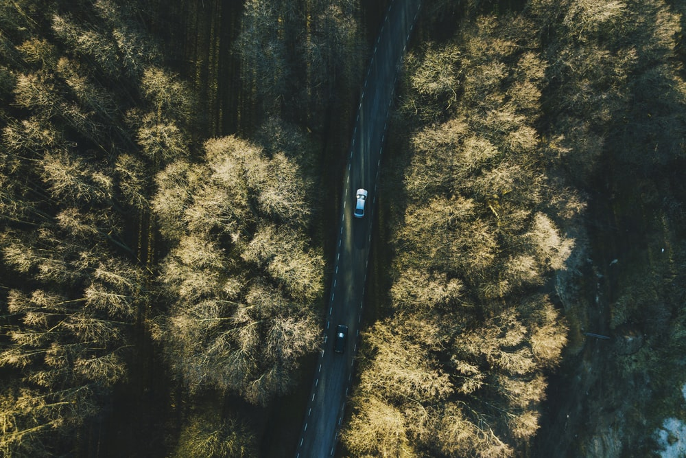 aerial view of two vehicles on road between trees