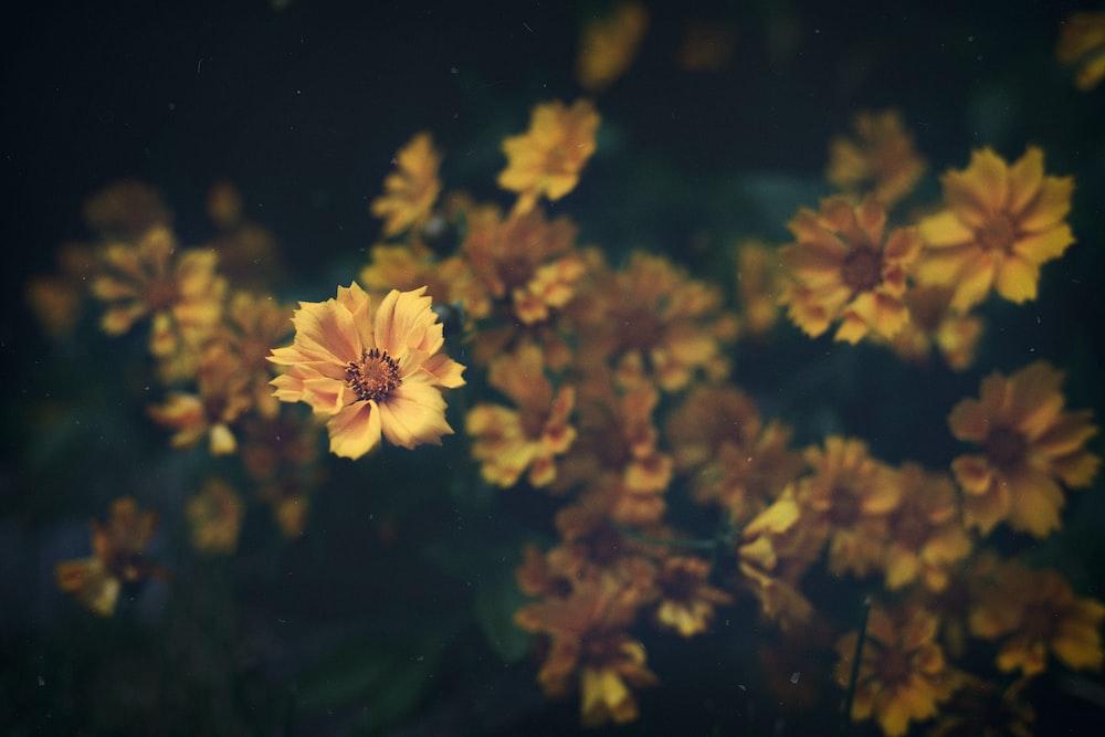 bokeh photography of yellow flowers