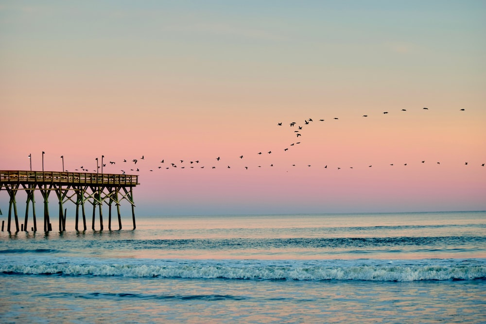 birds in flight from pier over cean