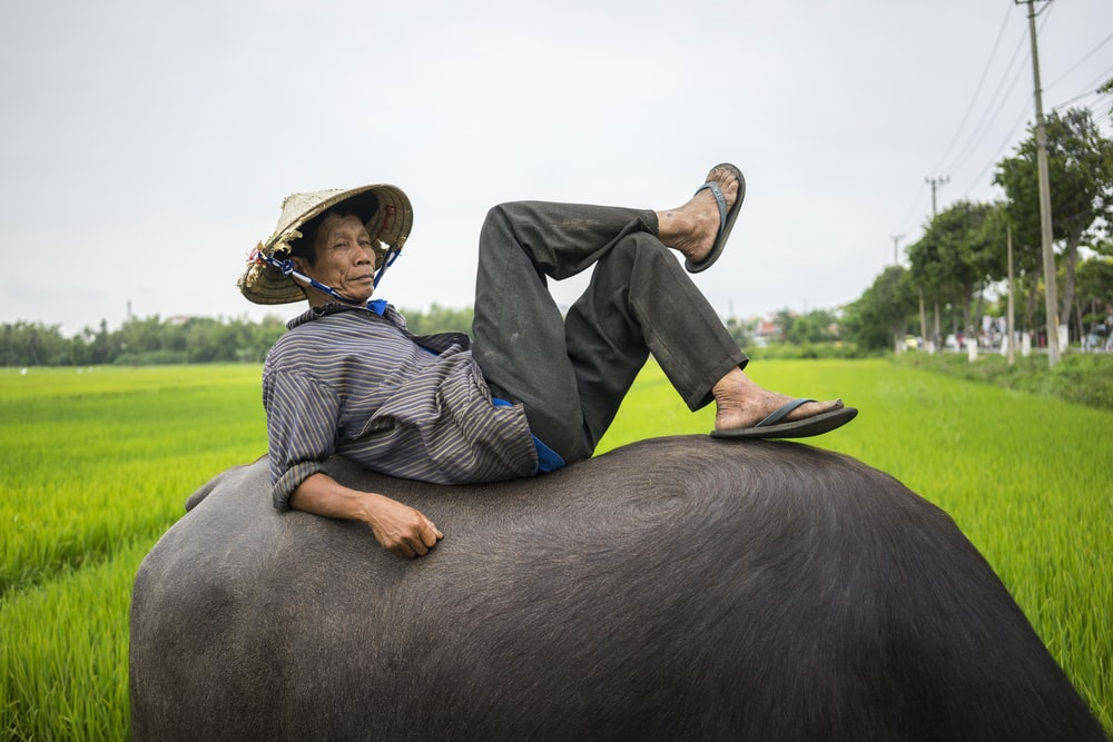 man resting on top of buffalo outdoor