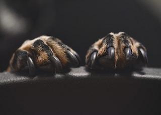 brown and black animal paw