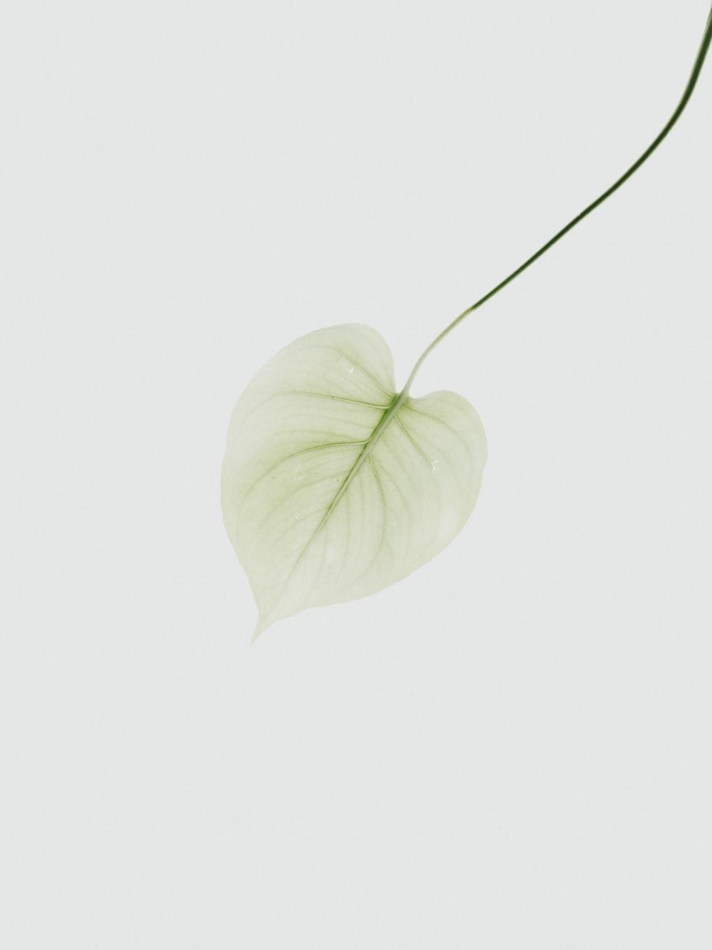 yellow green leaf