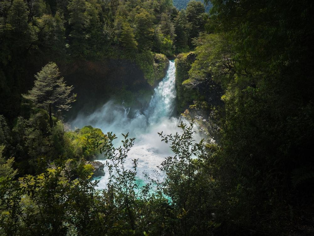 waterfalls raging near forest