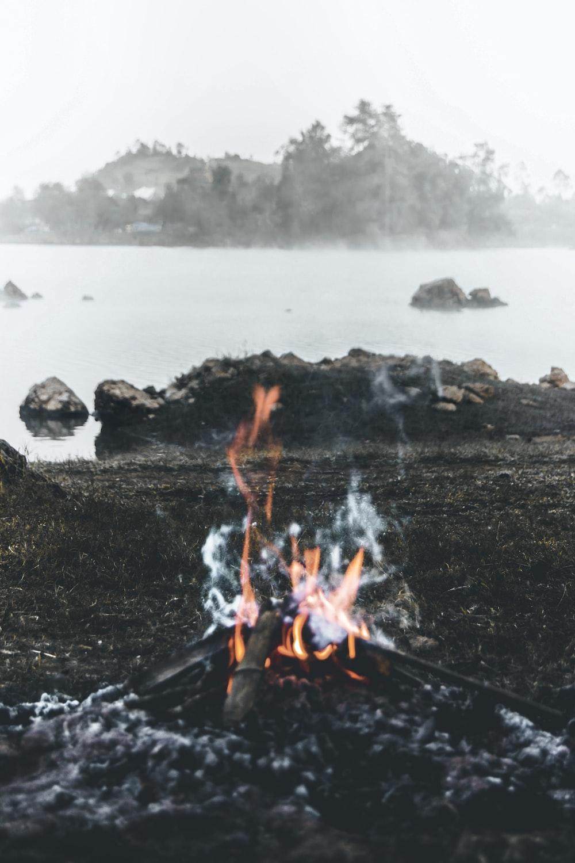 fire wood near body of water