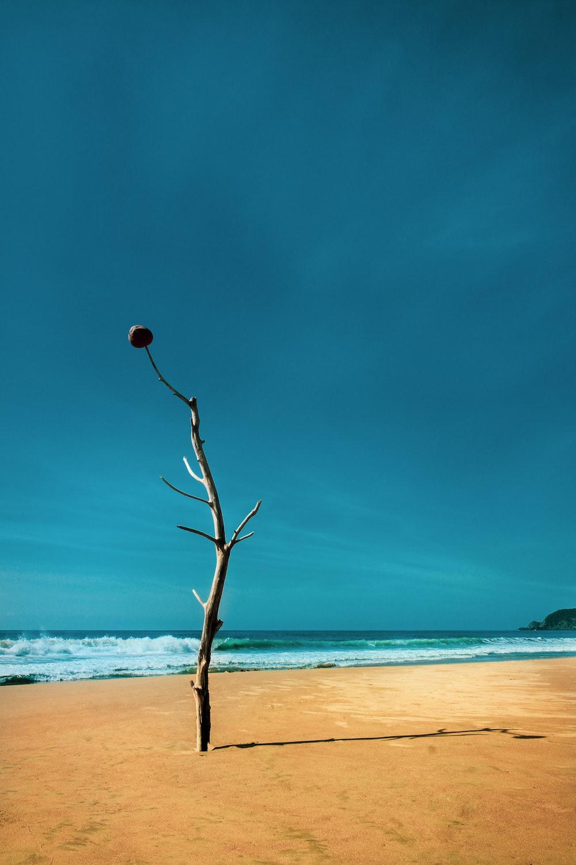 brown tree beside sea during daytime
