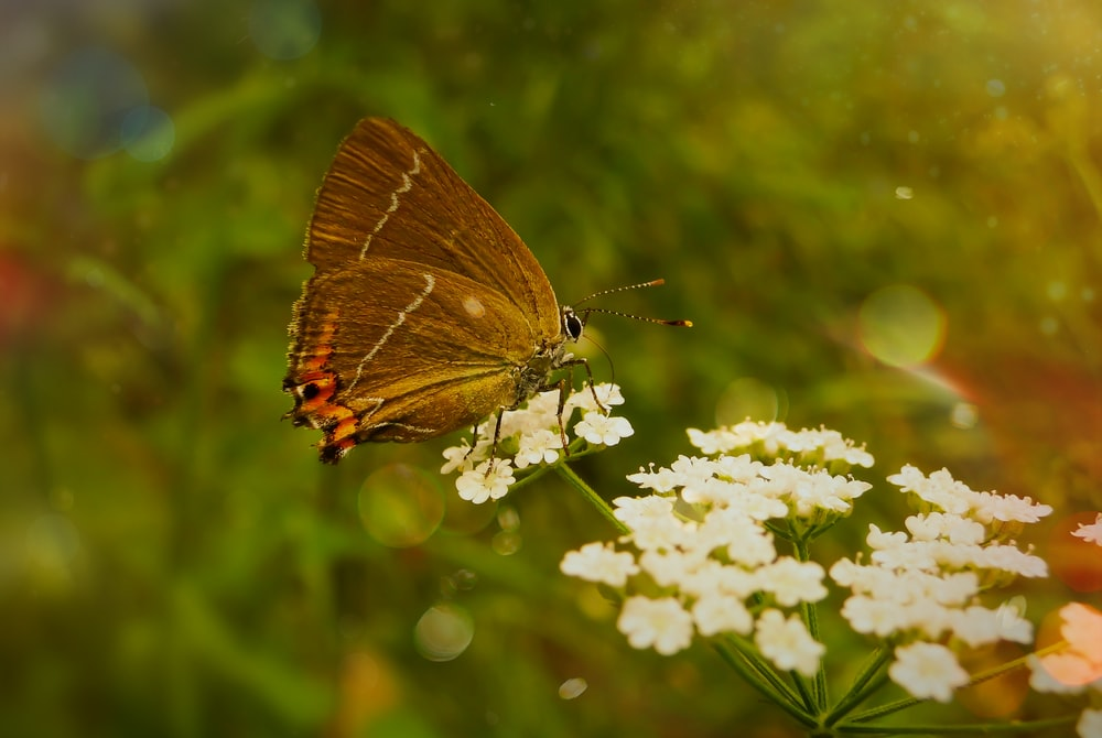 bokeh photography of brown butterfly