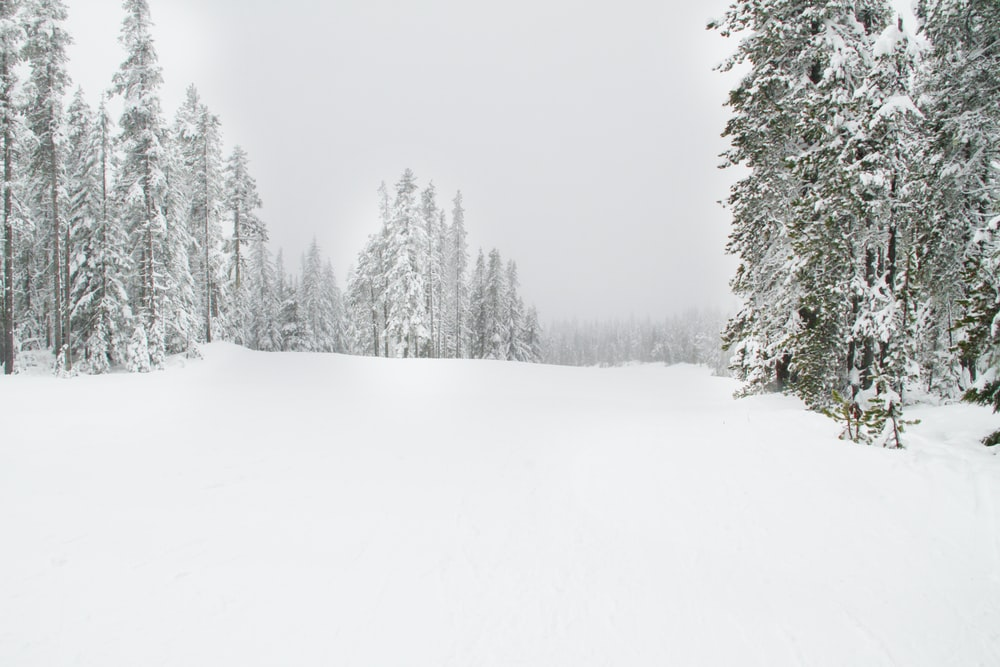 snow field surrounded by trees