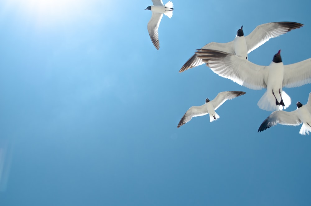 five white birds flying